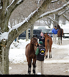 F-T Sale Shows Consignors, Buyers Resilient
