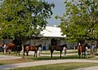 Optimism High for Fasig-Tipton July Yearlings