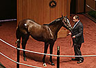 Unbridled's Song Colt Brings $400,000 at F-T