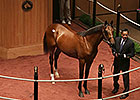 Cowboy Cal Colt Sells for $550,000