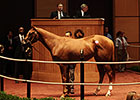 Bedford Land Tops Horses of Racing Age Sale