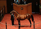 F-T Sale: Scat Daddy Colt Brings $385,000