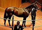 Molly Morgan Brings $1.35M at F-T Sale