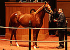 Distorted Humor Colt Brings $500,000 at F-T