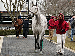 Fasig-Tipton Winter Mixed Sale Posts Declines