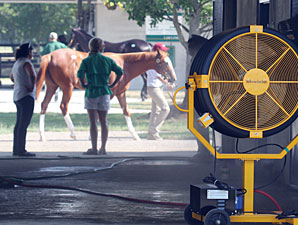 Sellers Try to Help Horses Beat Heat at F-T