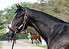 A.P. Indy Filly Brings $1.1 Million at F-T