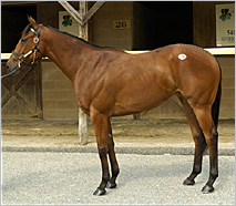 Fasig-Tipton Midlantic Sale Posts Record Gross; Silver Deputy Filly Sells for $450,000