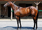 Indian Charlie Colt Tops F-T Midlantic Sale