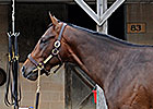 Unbridled&#39;s Song Colt Tops Midlantic Day 1