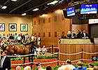 Smart Strike Filly Brings $1.25M at F-T Sale
