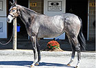 Midlantic Sale Topped by Malibu Moon Filly