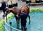 Fillies Top Opening Session at Fasig-Tipton