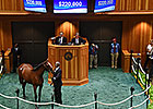 Proud Citizen Filly Brings $220,000 at F-T