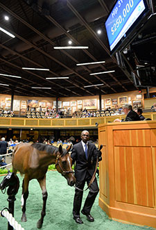 F-T New York-Bred Sale Opens With Gains