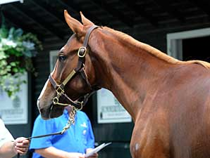 NY-Bred Sale Finishes Strong, Avg. Up 5%