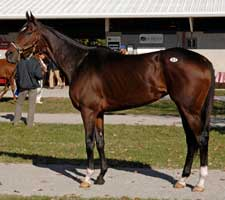 Maryfield a Deal at $1,250,000 at Fasig-Tipton