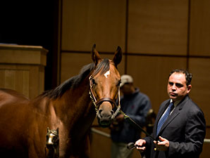 Awesome Feather  brought $2.3 million to top the 2010 Fasig-Tipton Kentucky November select mixed sale.
