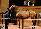 In-Foal Let Faith Arise Brings $2.1M at F-T