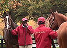 Fasig-Tipton November Sale: Preview
