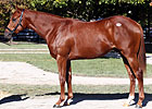 Fasig-Tipton Sees More October Gains