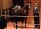 Smart Strike Filly New F-T Sale Topper