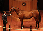 Tapit Filly Tops Record F-T October Sale