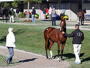 Yearlings to Watch at Fasig-Tipton October