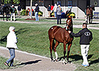 Fasig-Tipton Catalogs 1,236 for October Sale