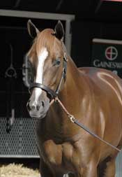 Mr. Greeley Colt Tops Saratoga Sale at $2.2 Million