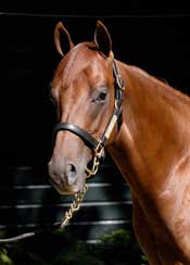 Former Airline Founder Enjoys Breeding Success