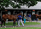 Saratoga Offers Boutique Yearling Market
