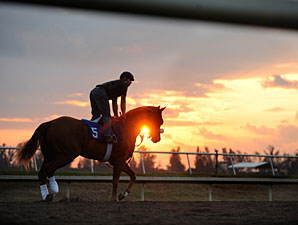 Palm Meadows: F-T Sale's New Home Sweet Home