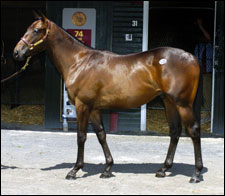 $3.1 Million Storm Cat Colt Lifts F-T Saratoga Sale