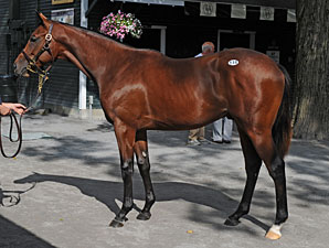Bernardini Colt Goes for $1.2 Million