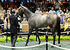 Medaglia d&#39;Oro Filly Brings $1.575M at F-T