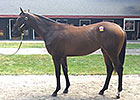 Fasig-Tipton Saratoga: Hip 104 by War Front