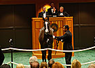 Tapit Colt Brings $1.2M at Fasig-Tipton