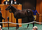 Street Cry Colt Brings $1.4M at Fasig-Tipton