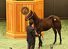 Shackleford Weanling Tops F-T Saratoga Sale