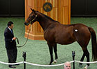 Filly, Mare Tie for Highest Price at F-T Sale