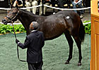 Dynaformer Filly Sells for $1,225,000