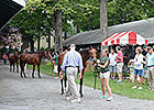 Optimism Going into Sale of New York-Breds