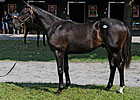 Street Cry Colt Brings $800,000 at Saratoga