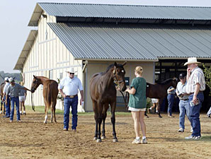 Texas Sale Has 'Lot of Energy'