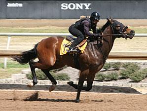 Fasig-Tipton Texas Catalogs 167 Horses