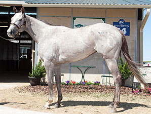 Flashy Bull Offspring Tops F-T Texas 2YO Sale