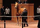 Melnyk Horses Bring Gratifying Sale Results