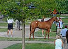 Fasig-Tipton Kentucky Sale: No Big Surprises