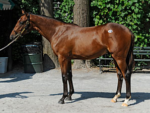 Smart Strike Colt Sells for $750,000